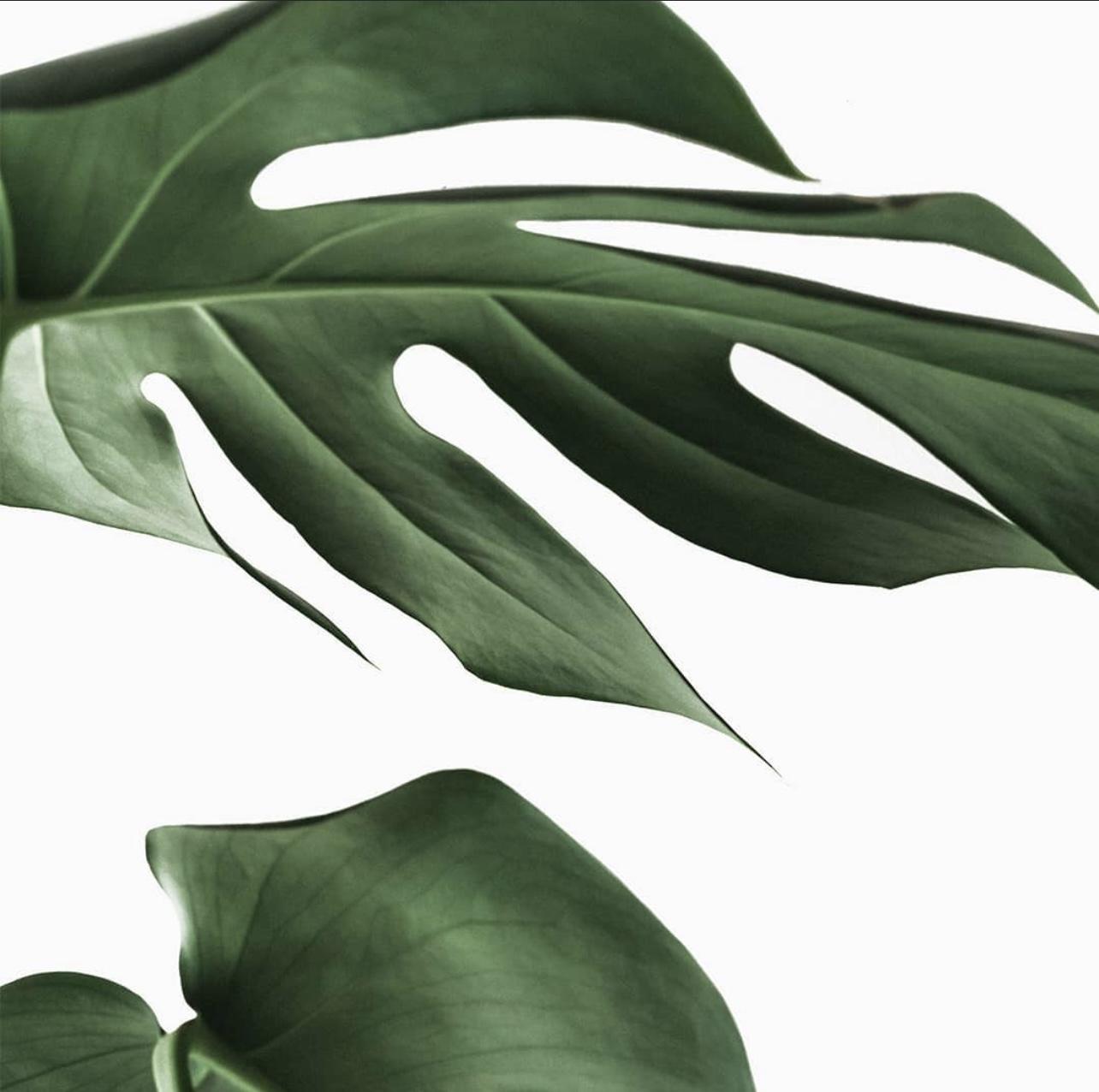 Microblading • Lashlifting • Browlifting • Hydra Beauty